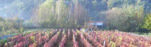 Vigne Comune di Villar Focchiardo
