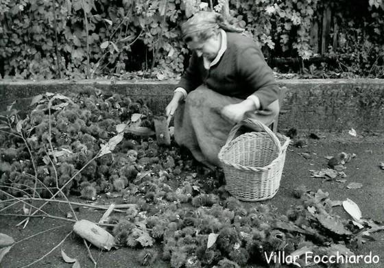 foto d'epoca di una donna che raccoglie castagne. Foto del Comune di Villar Focchiardo
