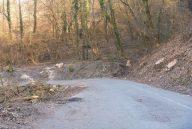 Taglio alberi ciglio strada